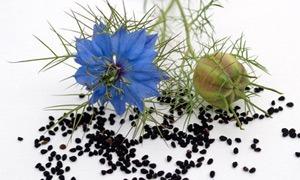 semena-chernogo-tmina